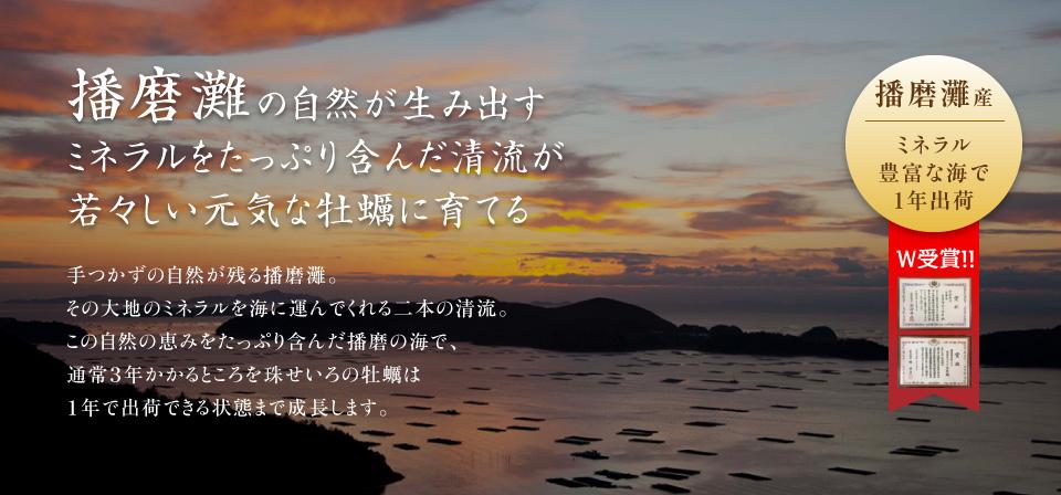 播磨灘の自然が生み出すミネラルをたっぷり含んだ清流が若々しい元気な牡蠣に育てる