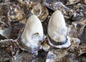 蒸し牡蠣のモニター調査結果で50代おすすめの牡蠣レシピ!「牡蠣とホウレン草のグラタン」